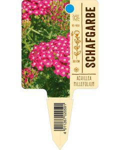 Achilleamillefolium, Bildstecketikett VS: