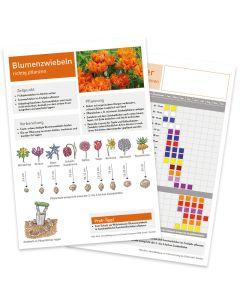 Infoblatt Blumenzwiebeln/Blühkalender Vorder- und Rückseite