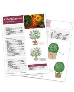 Infoblatt Kübelpflanzen Vorder- und Rückseite