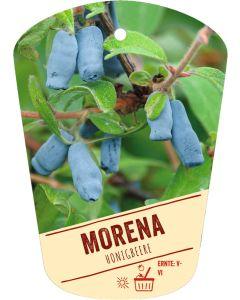 Lonicera caerulea 'Morena', Bildhängeetikett VS