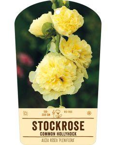 Bildstabetikett, Alcea rosea 'Pleniflora' VS