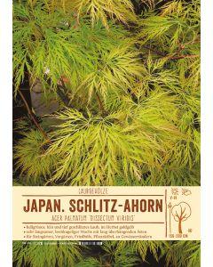 Sortenschild, Acer palmatum 'Dissectum Viridis'