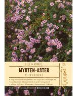 Sortenschild, Aster ericoides