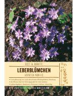 Sortenschild, Hepatica nobilis