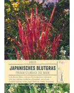 Sortenschild, Imperata cylindrica 'Red Baron'