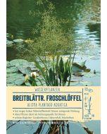 Sortenschild, Alisma plantago-aquatica