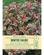 Sortenschild, Salvia offc. 'Tricolor'