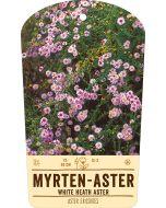 Bildstabetikett, Aster ericoides VS