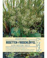 Sortenschild, Alisma parviflora 'Rosette'