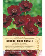 Sortenschild, Cosmos atrosanguineus