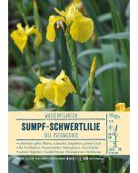 Sortenschild, Iris pseudacorus