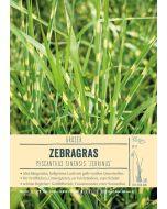 Sortenschild, Miscanthus sinensis 'Zebrinus'