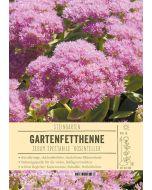 Sortenschild, Sedum spectabile 'Rosenteller'