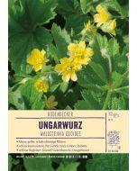 Sortenschild, Waldsteinia geoides