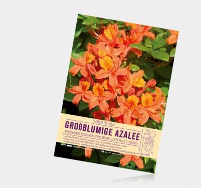 Pflanzenschild von Güse im Format A4