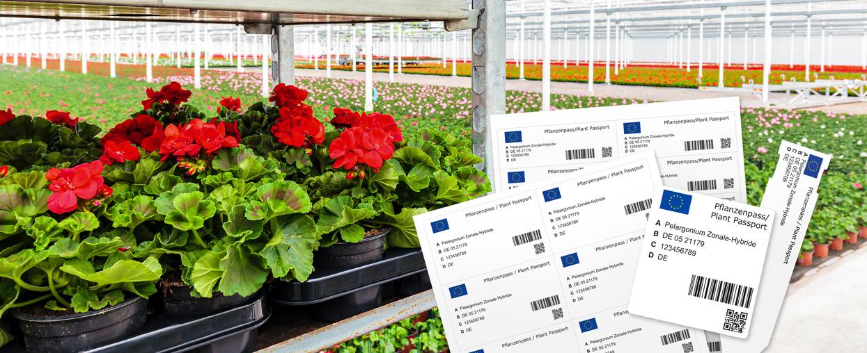 Headerbild Pflanzenpass mit Etiketten